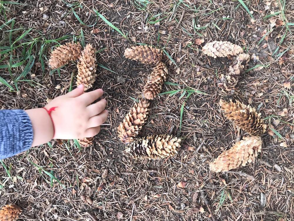Learn Shapes with Pine Cones